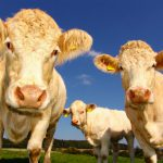 Waarom minder vlees eten goed is voor onze planeet