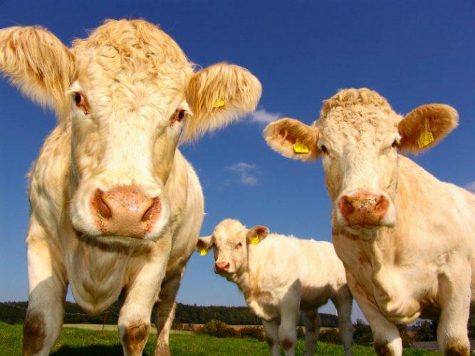 waarom-minder-vlees-eten-goed-is-voor-onze-planeet
